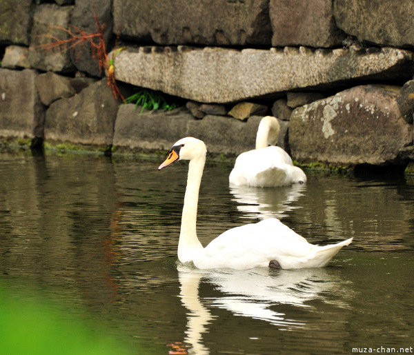 Swan from Imperial Palace