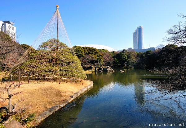Koishikawa Kōrakuen Garden, Hitotsu-matsu Pine Tree, Tokyo