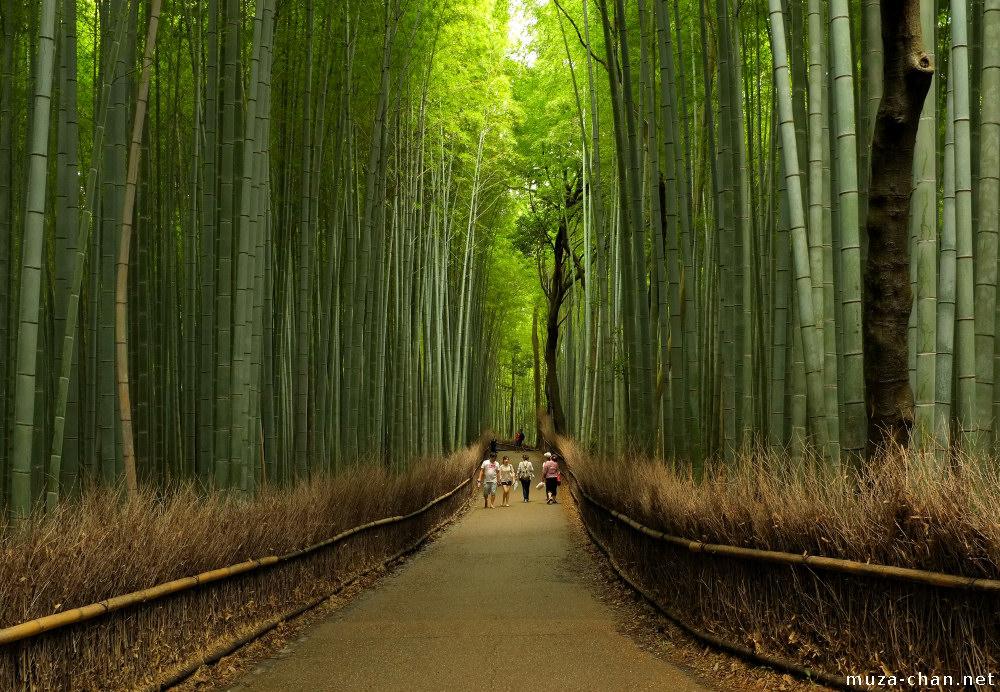 Kyoto Arashiyama Bamboo Groves