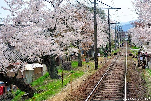 Cherry blossom tunnel, Keifuku line, Arashiyama, Kyoto