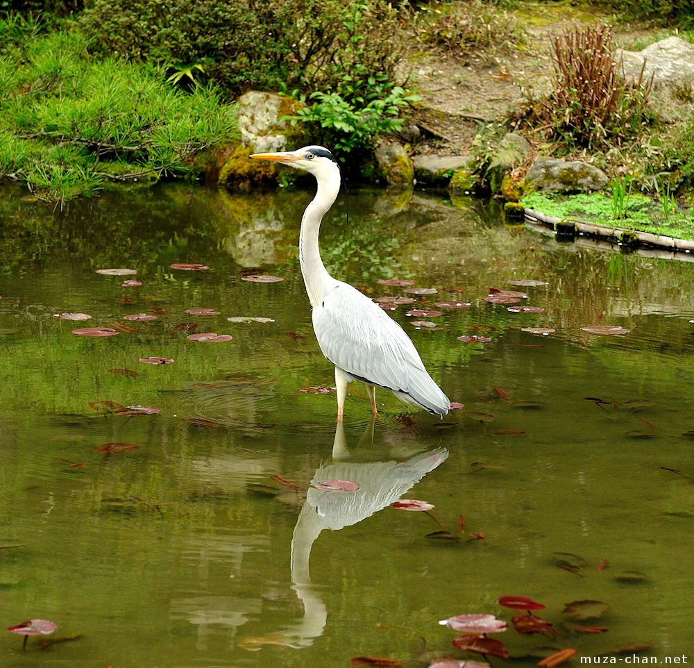 Heron Symbol Of Buddhist Meditation