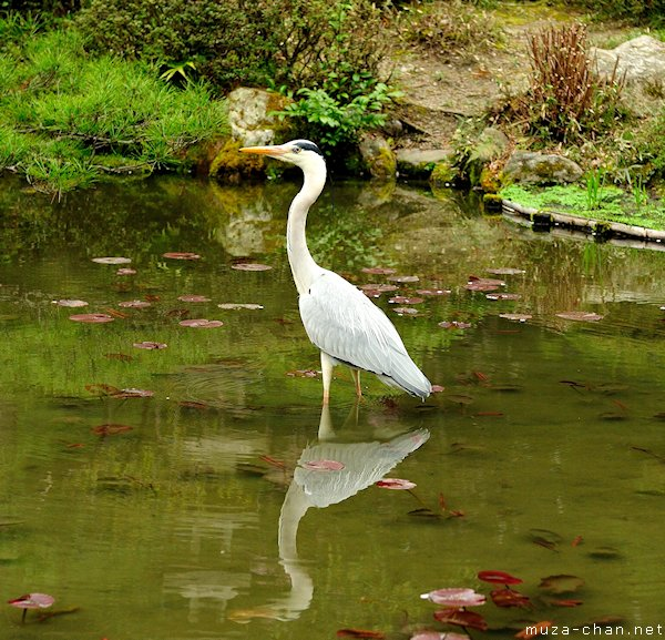 Heron, Heian Shrine, Kyoto