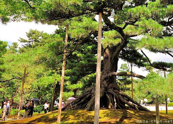 Neagari no Matsu (Raised Roots Pine), Kenrokuen Garden, Kanazawa