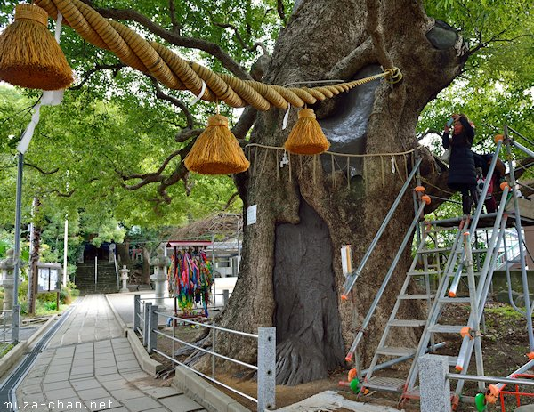 A-bombed camphor tree, Sanno Shrine, Nagasaki