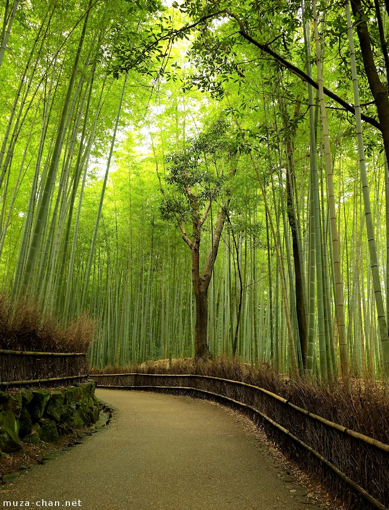 Simply Beautiful Japanese Scenes Arashiyama Bamboo Groves