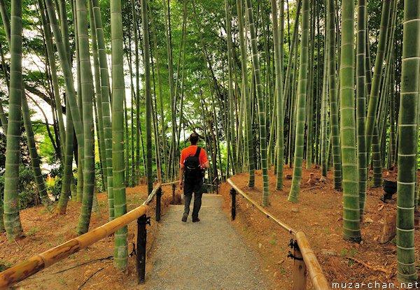 Bamboo grove, Kodaiji Temple, Higashiyama, Kyoto