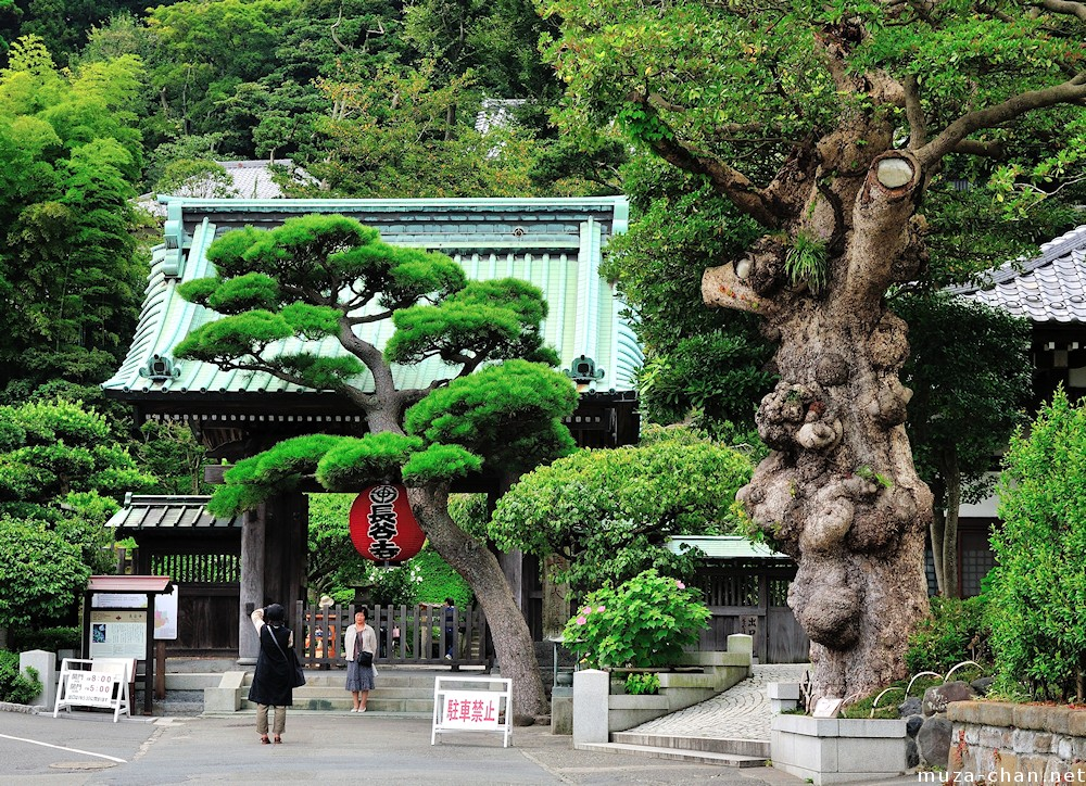 The story of Kamakura Hasedera Temple