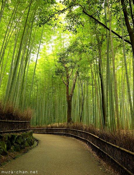 Bamboo groves, Arashiyama
