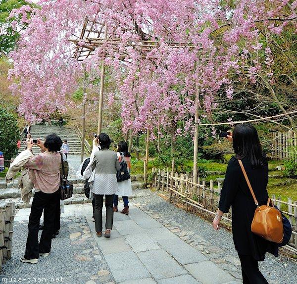 Ryoan-ji Temple Garden, Kyoto