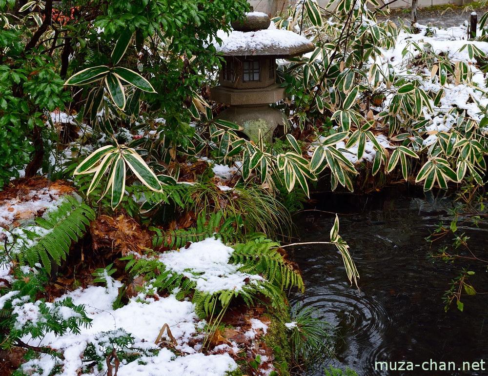 The Samurai's Garden Summary & Study Guide