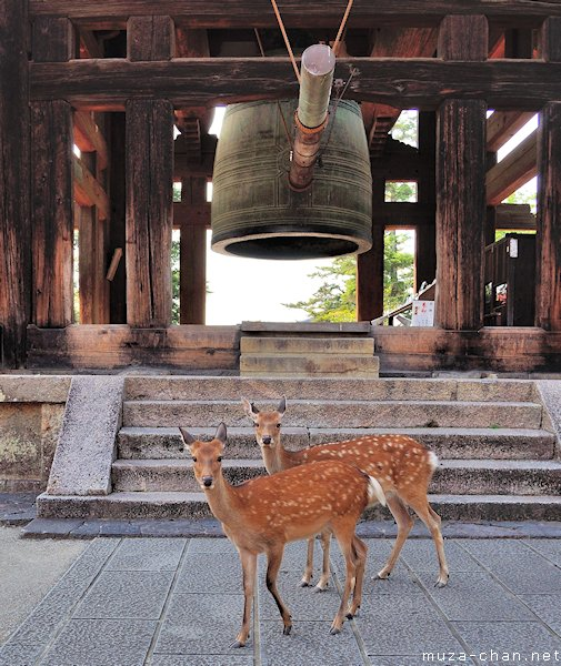 Shika deer at Tōdai-ji Temple, Nara