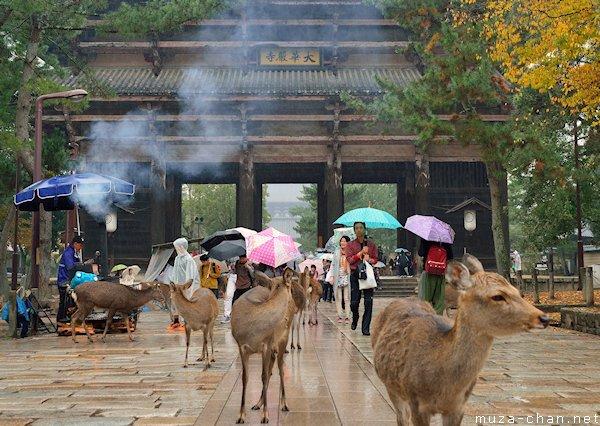 Shika deer, Nara