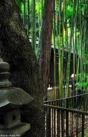 The bamboo cutter from the Hato Mori Hachiman Shrine
