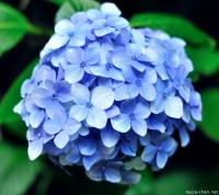 Hondoji, the Temple of Hydrangeas