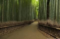 Kyoto Arashiyama bamboo groves walking path