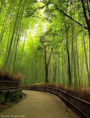 Simply beautiful Japanese scenes, Arashiyama bamboo groves