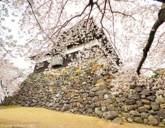 Japanese castle viewed through cherry blossoms