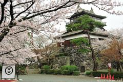 One of the Top 100 Cherry Blossom Spots, Maruoka Castle