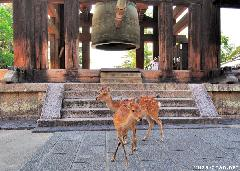 The Story of Nara Deer