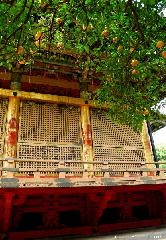 Orange Tree at Toshougu Shrine