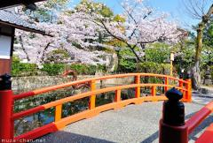 Simply beautiful Japanese scenes, Red bridge and cherry blossoms at Mibu-dera, Kyoto