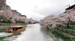 Pleasure boats and cherry blossoms