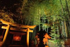 Bamboo grove night illumination in Kyoto