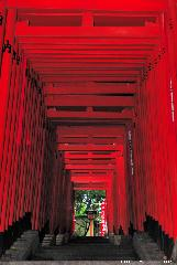 Sightseeing Tokyo, the most beautiful Torii path