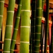 Bamboo at Hie Shrine