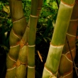 Bamboo at Imperial Palace Garden
