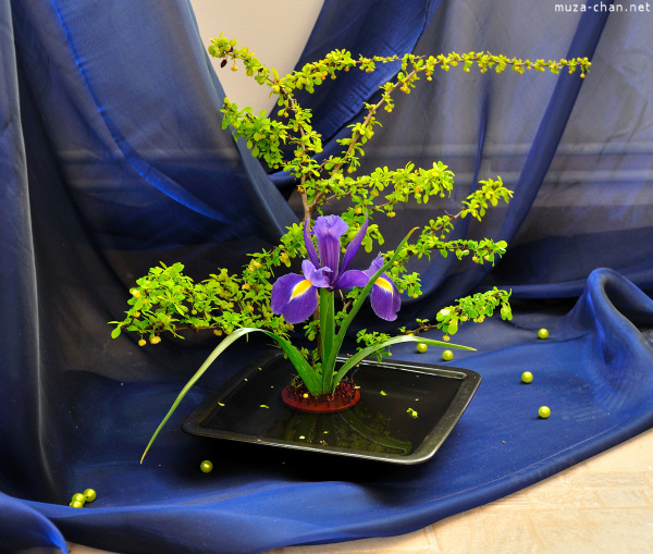 bucharest-botanical-garden-ikebana-18.jpg
