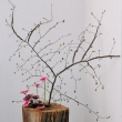 bucharest-botanical-garden-ikebana-05.jpg