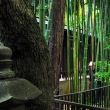 Bamboo at Hato Mori Hachiman Shrine