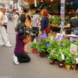 Filming at Iriya Asagao (Morning Glory) Market at Iriya Temple