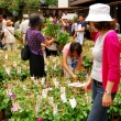 Iriya Asagao (Morning Glory) Market at Iriya Temple