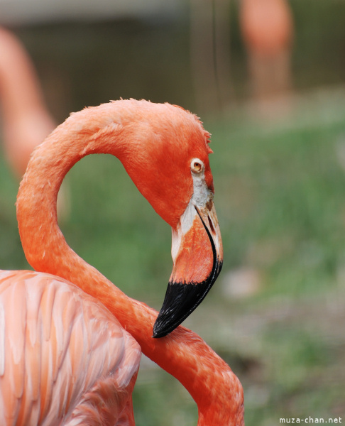 zoo-ueno-flamingo-1.jpg