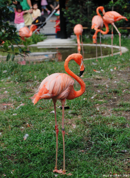 zoo-ueno-flamingo.jpg